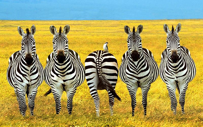 Зачем ехать в Танзанию?