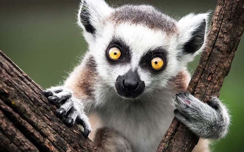 10 причин посетить Мадагаскар_1