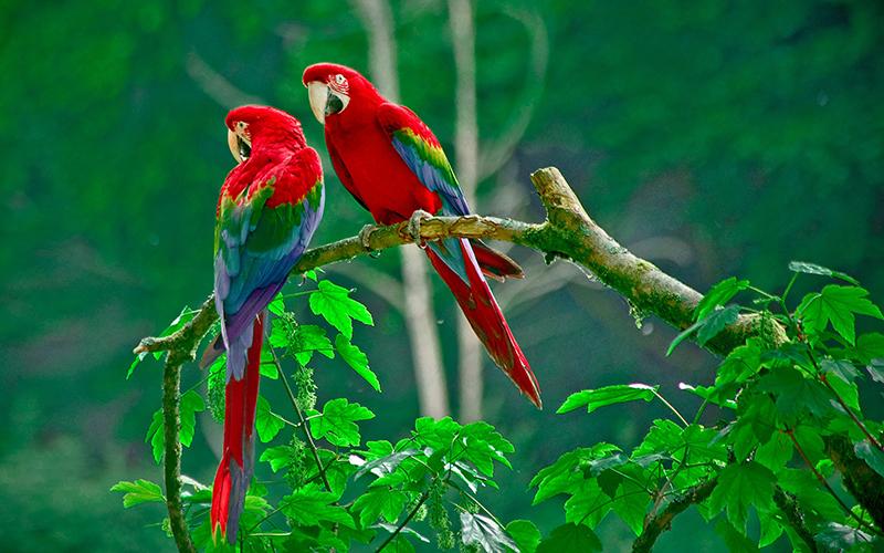 10 животных, которых нужно увидеть в Коста Рике_1
