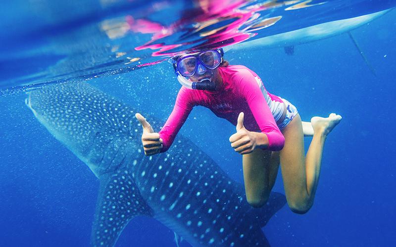 Поплавайте с тигровой акулой и окунитесь с водопад_1